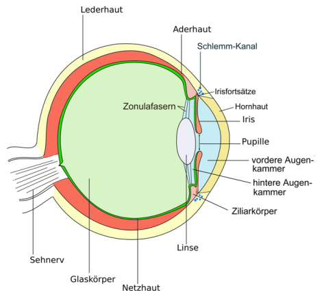 auge in physik